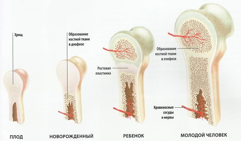 mamki-bolshaya-grud